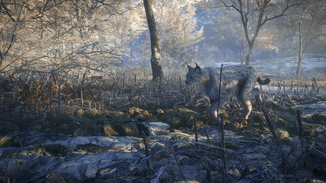 TheHunter: Call of the Wild Crack Status | CrackWatch